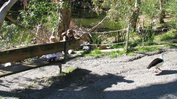 Bridget and Debbie explore a wildlife park in Australia! see more of their adventures at www.stitchingwithelli.com